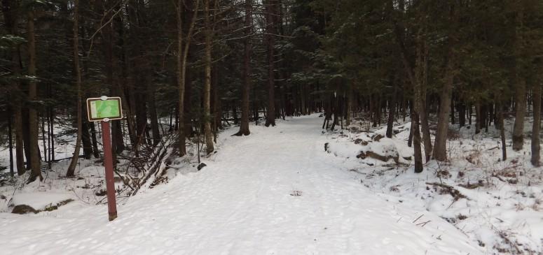 Parc écologique - Sentiers - Hiver