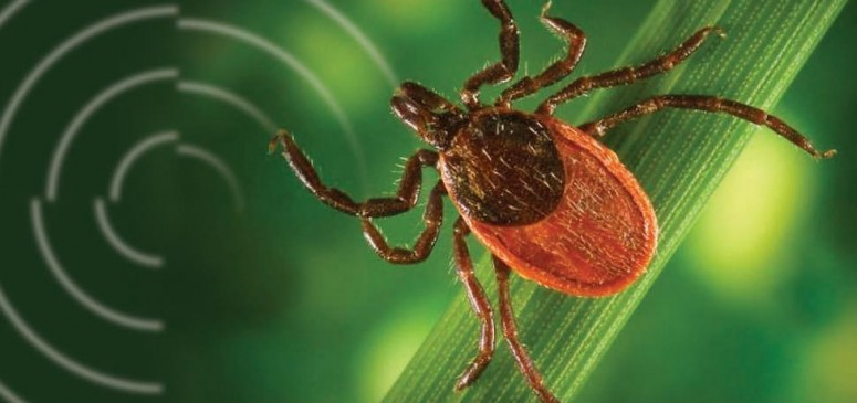 Maladie-Lyme-tique-Santé Montérégie