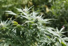 Cannabis_SQ_Gouv.QC